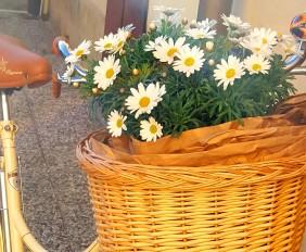 foto-fiori